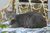 Key West (Florida) Trip 2016 2713Ri 4x6 (edgarandron - Busy!) Tags: cat cats kitty kitties cute feline