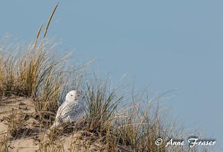 Sitting on the dunes