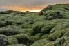 Lava Camp at sunrise (Guillermo S.L.) Tags: iceland islandia moss sunrise musgo lava