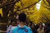Tourist (Yorkey&Rin) Tags: 2017 autumn em5markii ginkgo japan jingugaien kimono november olympus olympusm14150mmf4056ii rin tokyo tourist uc260073 河童 外国人 観光客 銀杏 銀杏並木 秋 神宮外苑 着物姿 東京都