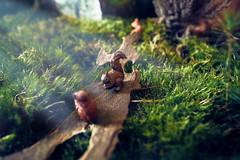 Nature miniature (Rollkidd) Tags: jouet toy nature mousse vert animaux écureuil squirrel miniature figurines