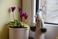 Helping ghost (petrOlly) Tags: europe europa germany deutschland borkum island eastfrisia ostfriesland flower flowers decoration object objects window windows