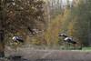 l'envol. (vyclem78) Tags: oiseau oiseaux automne lacduder grues cendrées