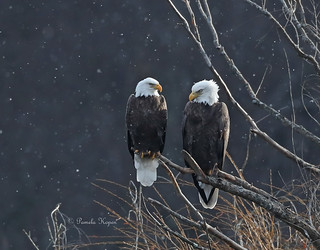 A brief break in the clouds brought some light onto this couple