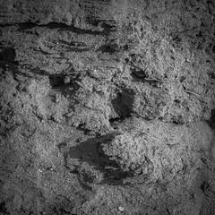 DSCF0824 (rjosef) Tags: borrego desert