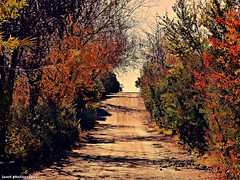 IMG_20171203_141826_662 (lauracastillo5) Tags: path autumncolors autumn nature photography landscape outdoors trees