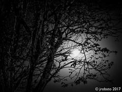 Moonlight (orgazmo) Tags: nightscapes nightshots moon trees nature blackwhite monochrome fujifilm fujix fujinon xf1655mmf28rlmwr xpro2