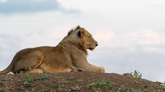 Nairobi-Nationalpark-7575 (ovg2012) Tags: kenia kenya nairobi nairobinationalpark