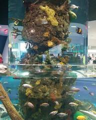 Salt and fresh #toronto #ripleysaquarium #aquarium #ticket #latergram #tank #saltwater #freshwater (randyfmcdonald) Tags: ripleysaquarium tank latergram saltwater ticket freshwater aquarium toronto