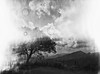 The tree of fire (Italian Film Photography) Tags: lightleaks tree fire landscape mountains film analogue bw silver mistake unexpected fujifilm neopan cros ga645zi 120 mediumformat fatroll blackwhite