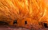 Burning Up (carolina_sky) Tags: houseonfire pueblo ruin utah bearsearsnationalmonument cedarmesa sandstone red fire flame bricks skymatthewsphotography pentaxk1 pentax1530mm pixelshift landscape westernusa
