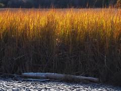 Little Bluff Conservation Area - Prince Edward County (Richard Pilon) Tags: autumn nature fall conservationarea ontario princeedwardcounty olympus littlebluffconservationarea