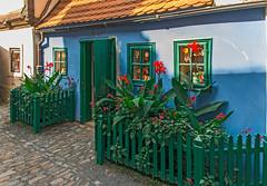 Golden Lane House and Garden (fotofrysk) Tags: goldenlane house home colours door blue green garden plants cobblestones castledistrict easterneuropetrip prague praha czechrepublic sigma1750mmf28exdcoxhsm nikond7100 201709226535