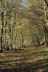 Waldweg (petra.wruck) Tags: wald forest woods wood woodland forestpath landschaft landschaften landscape landscapes