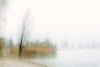 changes...... (Brigitte Lorenz) Tags: abstract trees lakeconstance autumn reed mood icm landscapes