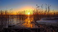 Morning Shine (Jens Haggren) Tags: sunrise morning sea jetty boat water seascape landscape reed reflections shine sunshine sky view nacka sweden jenshaggren