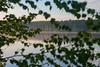 Green window (yuriye) Tags: yuriye russia birch leave leaves green river volga landscape summer morning crown curtain blind window riverside tree silence eco ecology