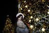 We can talk about Christmas! (Sugar Lokifer) Tags: dream doll tender beea bjd msd resin christmas central world