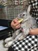 アトムくん (ココロのおうち) Tags: rabbit bunny pet 動物 うさぎ ペット うさぎ専門店 ココロのおうち うさぎラブ