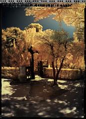Porta xinesa del Laberint (Ar@lee) Tags: barcelona catalunya horta laberint fotografíainfrarrojos fullspectrum espectrecomplet photographyinfrared paisatges filtre720nm airelibre exteriors ir d50 nikond50 domenicobagutti antonideszanjas marquesdellupiàianfarràs árbol bordeparafotos colours jardines red trees garden golden