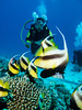 Red Sea Bannerfish IMG_8851 (David Whistlecraft) Tags: canong12 seasea seaseays27dx underwaterphotography redsea underwater underwaterimages scubadiving scuba marinelife marinefish redseabannerfish bannerfish