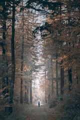 Giant Trees (frank_w_aus_l) Tags: anna nature fall forest wald nikon d810 nikkor 10514 primelens fog cold path light depth dorsten nordrheinwestfalen deutschland de color haze autumn lonely giant scale