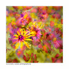 Letzte Farben / last colors (H. Roebke) Tags: autumn de canon5dmkiv color herbst quadrat flower germany blume blätter fall leaves 2017 flora multiexposure canon1635mmf28lisiii mehrfachbelichtung lightroom farbe