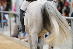 _MG_6349 (dreiwn) Tags: ridingarena reitturnier reiten reitplatz reitverein reitsport ridingclub equestrian showjumping springreiten horse horseback horseriding horseshow pferdesport pferd pony pferde tamronsp70200f28divcusd