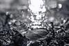etana (sami kuosmanen) Tags: metsä macro luonto light lähikuva creative closeup suomi syksy autumn art bokeh black finland forest lightpainting nature north europe expression kuusankoski kouvola dof