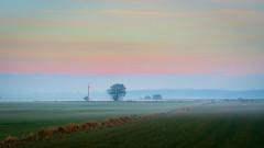 Foggy afternoon [49/100]