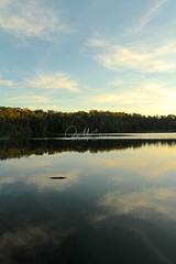 Lake Eacham - Late Afternoon (Caleb McElrea) Tags: athertontableland farnorthqueensland wettropicsofqueensland worldheritagearea unesco queensland australia rainforest tropical hot biodiversity wildlife wildlifephotography craterlakesnationalpark lakeeacham
