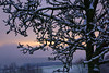 the old pear (Wöwwesch) Tags: tree snow landscape sky sunset winter morning cold calm quiet