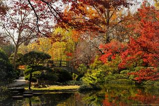 Fort Worth Japanese Garden
