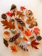 Autumn Collection (rachael242) Tags: autumn collection fall season seasonal leaf leaves acorn still life colors pine cone nature tree branch twig wood forest