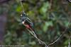 Elegant Trogon (Kukui Photography) Tags: bird madera canyon elegant trogon arizona eleganttrogon maderacanyon