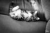 Autumn Sun (Yosha Photography) Tags: adorable animal babycat cat cats cuteanimal domestic feline felines kitty kittycat mammal monochrome petphoto petportrait siberian smallcat squee sweet felinephotography blackandwhite blackandwhitephotography catlady domesticanimal domesticatedanimals domesticatedcat felineportrait kitten petphotography monochromecat monochromeportrait monochromephotography