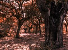 Peekaboo (Bai R.) Tags: autumn fall leaves trees girl hide seek hideseek magic forest woods magicforest enchantedforest game joy happiness happy trunk treetrunk