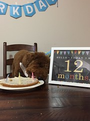 Ruby Red's Tucker is 1!