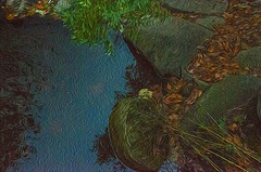 1338__0628FLOP (davidben33) Tags: brooklyn 718 ny quotnew yorkquot quotprospect parkquot autumn 2017 fall trees bushes leaves lake pets gooses ducks water sky clouds colors yellow green blue people quotstreet photosquot