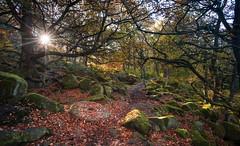 A Journey through Autumnal Light (davepsemmens) Tags: padleygorge autumn sun tranquil path trees light colours