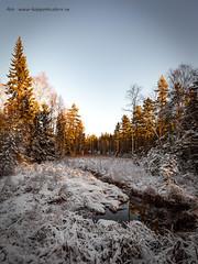 20171115003559 (koppomcolors) Tags: koppomcolors forest skog sweden sverige värmland varmland winter vinter snö snow