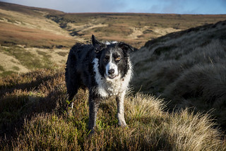 Getting mucky on the moors
