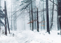 snowfall in fall (cherryspicks (off)) Tags: snow snowfall forest woods mountain trail zagreb sljeme medvednica cold