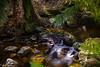 A splash of sun... (e0nn) Tags: steveselbyphotography steev steveselby tasmania lilydale water waterfall waterfalls pentax pentaxk1 hdpentaxdfa2470mmf28edsdmwr nisifilters nisi leendgrad zomei 15stop australia