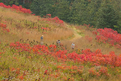 Autumn expedition (Irina1010) Tags: autumn grasses sumac colorful expedition people vegetation slope hill gibbsgardens canon