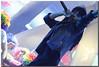 Orquesta Panorama (UfoSp@in ஐ★Freelance Photo★ஐ) Tags: orquestapanorama galicia music party 2017 apple alien photo photography photoshop photomatrix myself madrid macbookpro macbook mark canoneos5dmarkii spain live luz love lightroom sky mac night neon reflections light lens exposure eos retoques rock guadarrama