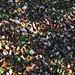 Colors de tardor al Camí dels Alous