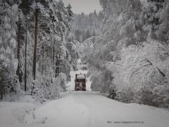 20171129001083 (koppomcolors) Tags: koppomcolors scania winter vinter snö snow värmland varmland forest skog sweden sverige scandinavia