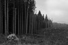 Enclosure (Jethro_aqualung) Tags: nikon d3100 via degli dei bofi nature landscape bw bn monochrome wood autumn