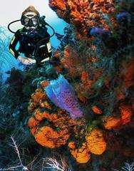 Lyna, St Lucia (jnhPhoto) Tags: jnhphoto scuba scubadiving stlucia coral coralreef ocean